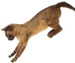 caidas_de_gatos