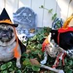 disfraces-caseros-para-mascotas-halloween-bruja-diablo