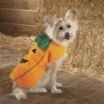 disfraces-caseros-para-mascotas-halloween-calabaza