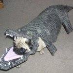 disfraces-caseros-para-mascotas-halloween-cocodrilo