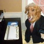 disfraces-caseros-para-mascotas-halloween-donald-trump
