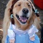 disfraces-caseros-para-mascotas-halloween-dorothy