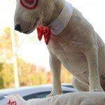 disfraces-caseros-para-mascotas-halloween-el-perro-de-target