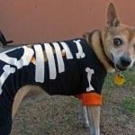 disfraces-caseros-para-mascotas-halloween-esqueleto