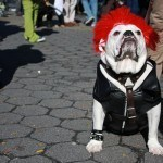 disfraces-caseros-para-mascotas-halloween-estrella-de-rock