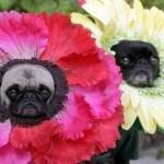 disfraces-caseros-para-mascotas-halloween-flores