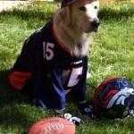 disfraces-caseros-para-mascotas-halloween-futbol-americano
