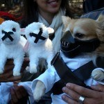 disfraces-caseros-para-mascotas-halloween-hannibal