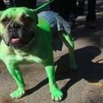 disfraces-caseros-para-mascotas-halloween-hulk