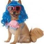 disfraces-caseros-para-mascotas-halloween-katy-perry