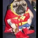 disfraces-caseros-para-mascotas-halloween-la-mujer-maravilla