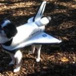 disfraces-caseros-para-mascotas-halloween-nave-espacial