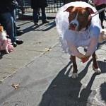 disfraces-caseros-para-mascotas-halloween-novia