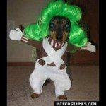 disfraces-caseros-para-mascotas-halloween-oompa-loompa
