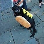 disfraces-caseros-para-mascotas-halloween-perrito-caliente
