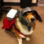 disfraces-caseros-para-mascotas-halloween-perro-espacial