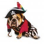 disfraces-caseros-para-mascotas-halloween-pirata