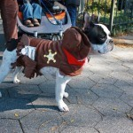 disfraces-caseros-para-mascotas-halloween-sheriff