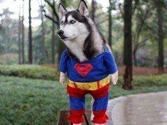 50 Disfraces caseros para mascotas | Carnaval 2015