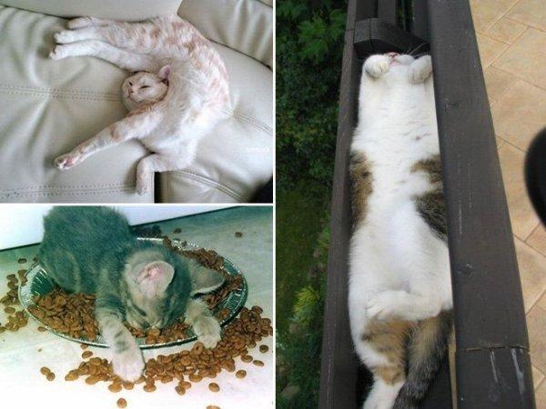 fotos-de-gatos-graciosos-gatos-dormidos-sofa-plato