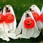 halloween-disfraces