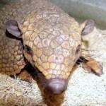 Fotos de animales raros13