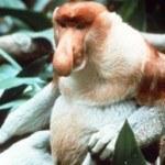 Fotos de animales raros16