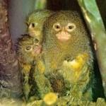 Fotos de animales raros5
