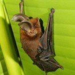 Fotos de animales raros6