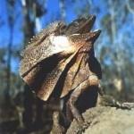 Fotos de animales raros7
