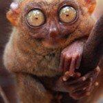 Fotos de animales raros9