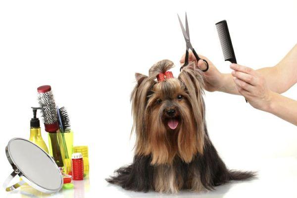 cortar pelo mascota