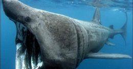 Animales marinos- Qué son, tipos y características