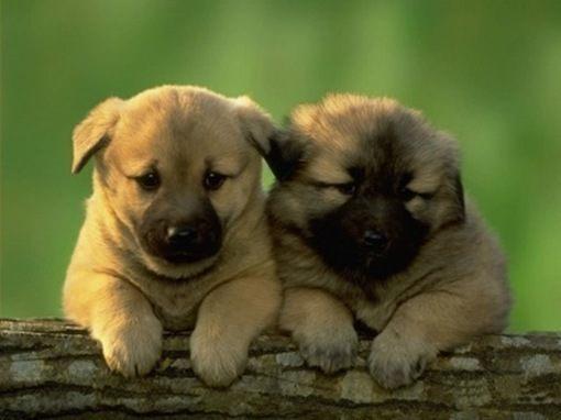 cachorros_consejos