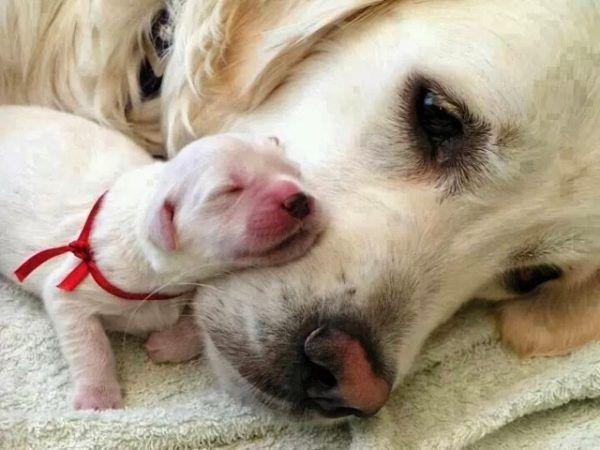 cuidados perros recien nacidos
