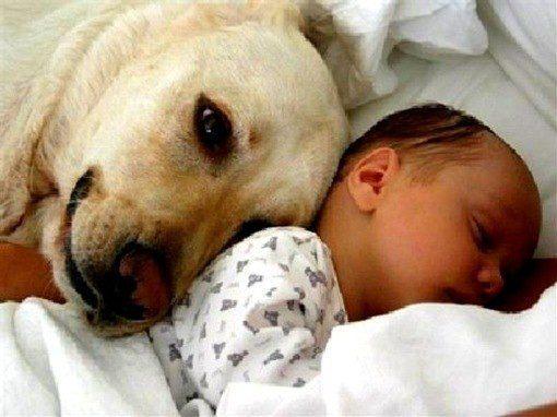 las mascotas y los bebes