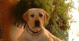 Alergia canina: síntomas, causas y tratamiento