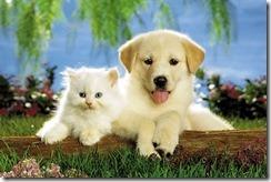 -Anonymous-Verdaderos-amigos-perro-y-gato