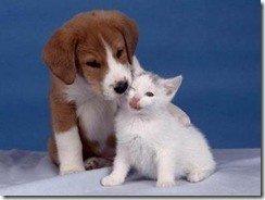 fotos-perros-gatos-peqghsghyugs