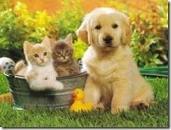 perros-y-gatos-mmmm