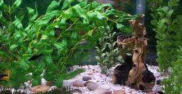 Cuidado del acuario en casa