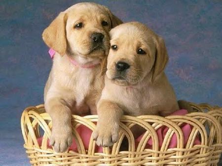 nombres de perros cachorros: