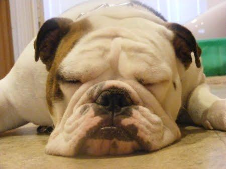 falta de nutrientes y sus efecto en los perros