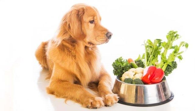 algunas-vitaminas-para-mascotas-que-son-las-vitaminas