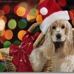 Wallpapers Christmasanimal21280