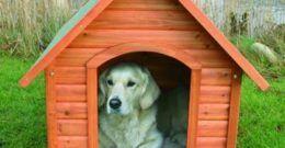 Cómo hacer una caseta de perro