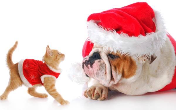 la-navidad-y-mascotas
