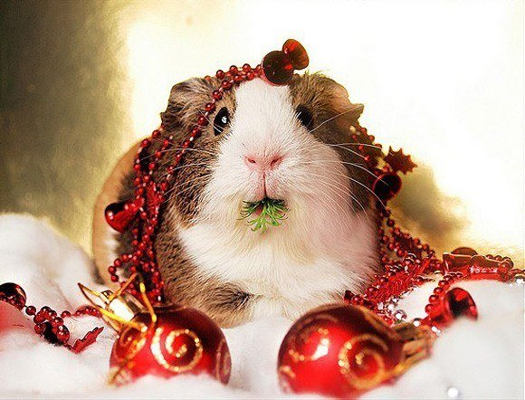 navidad-y-las-mascotas