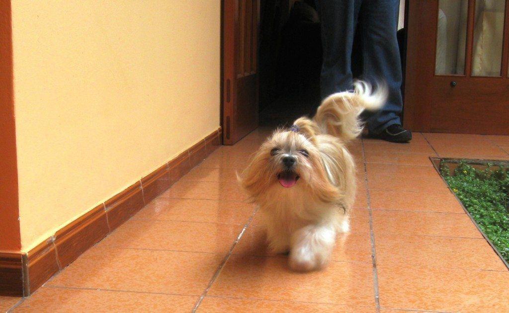 pelaje de perros
