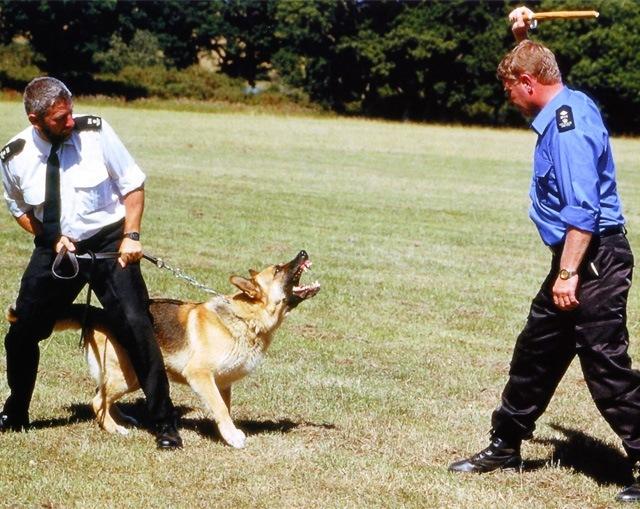 perro-ladrando-a-un-intruso